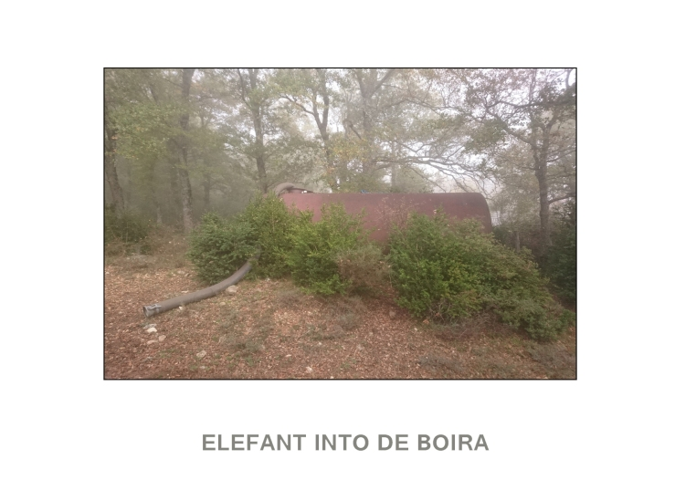 elefant into de boira